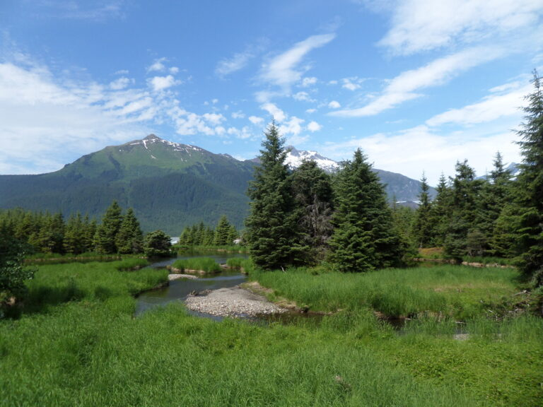 Spring Meadow | Alaska Retreat